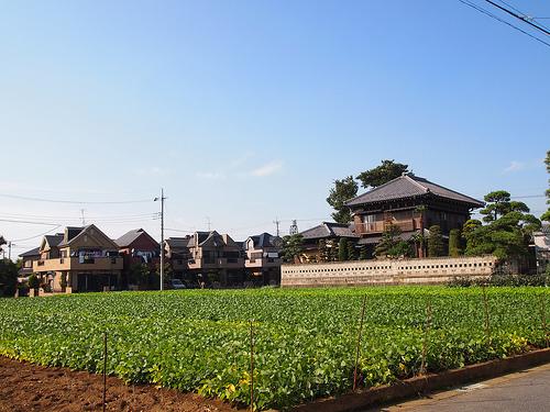 周囲はこんな感じの農園地帯。