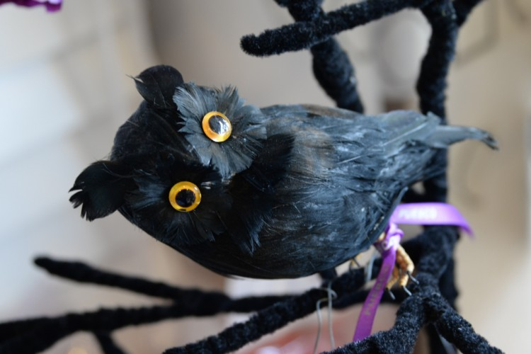愛嬌のある黒フクロウ。