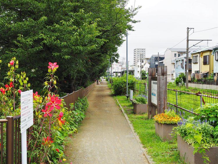 春になると桜並木となる川沿いの道。物件周辺には公園も多く、季節を感じられます。